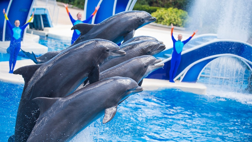 TLMD-delfinesSeaworld2